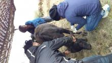 गाउँ,टोल खर्क खर्कमा पशु उपचार सेवा - ७