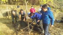 गाउँ,टोल खर्क खर्कमा पशु उपचार सेवा -४
